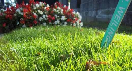 Weilinger_Friedhof_100_1345_web